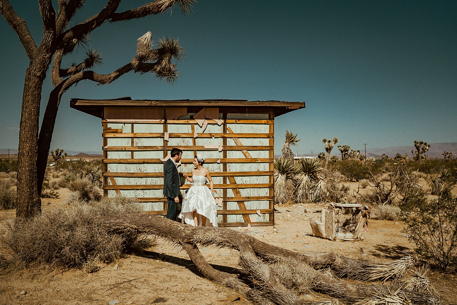 Joshua Tree Wedding Photos | Joshua Tree Wedding Photographer
